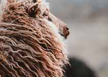 Best Wool for Felting: Review & Buying Guide in 2021